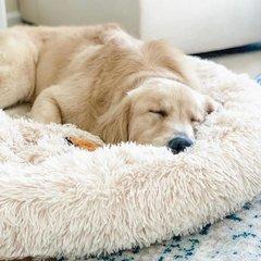 Hondenmanden en kussens