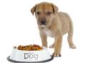 Voeding-hond