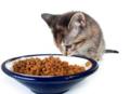 Voeding-Kat