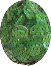 Zakje Cats Eyes Groen á 250 Gram