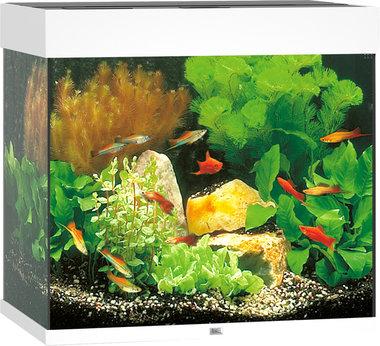 Juwel Aquarium Lido LED 120 Wit 61x41x58 cm
