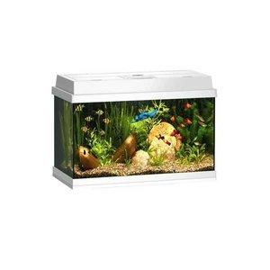 Juwel Aquarium Rekord 600 Wit 61x31x42 cm